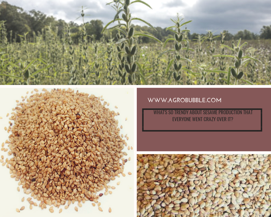 Sesame Production
