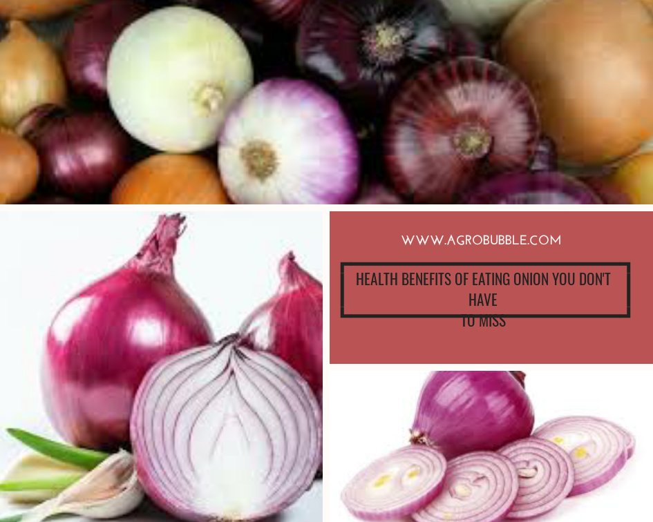 Agrobubble- onion benefits